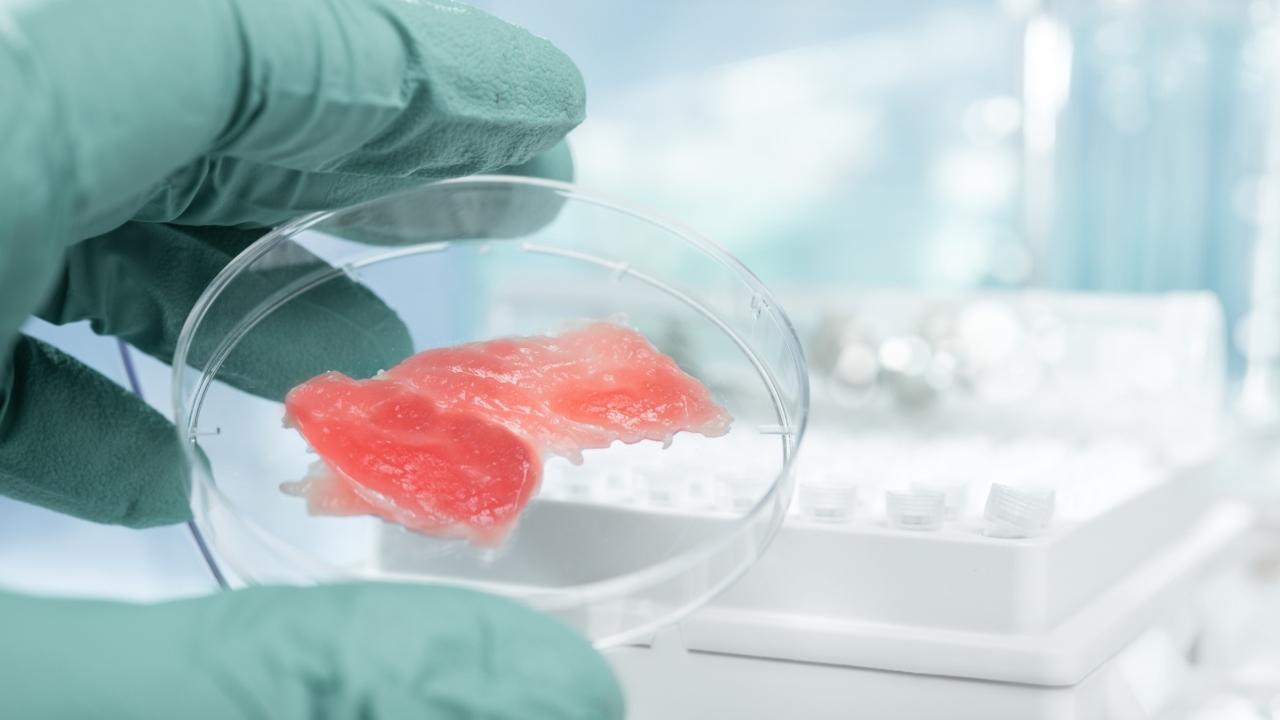 Hücre bazlı deniz ürünleri ve et